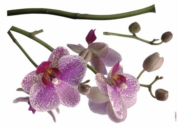 Sticker decorativ 17702 Orhidee 1