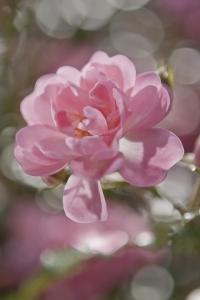 Fototapet 4-713 Bouquet0