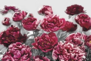 Fototapet XXL4-002 Flori rosii0
