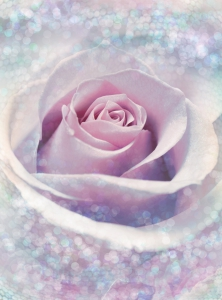 Fototapet XXL2-020 Trandafir roz0