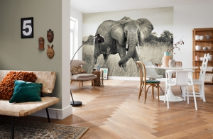 Fototapet XXL4-529 Elefant1