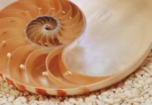 Fototapet 1-601 Nautilus0