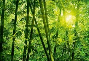 Fototapet 00123 Padurea de bambus0