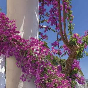 Fototapet 8-931 Amalfi1