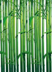 Fototapet 00421 Bambus0
