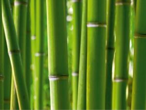 Fototapet FTS 0170 Bamboo0