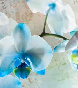 Fototapet FTL 1618 Floare albastra