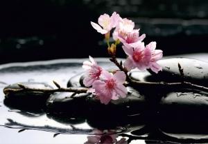 Fototapet FTS 0185 Flori roz si pietre0