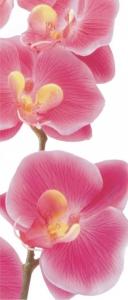 Fototapet FTV 0027 Orhidee roz0