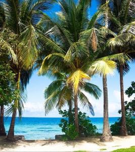 Fototapet FTL 1610 Palm Beach0