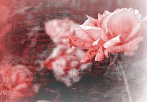 Fototapet FT 0322 Trandafir roz