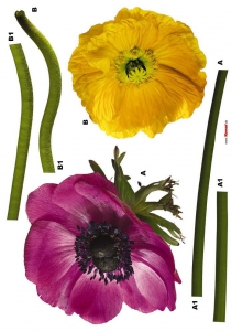 Sticker decorativ 17012 Anemone