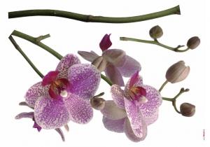 Sticker decorativ 17702 Orhidee1