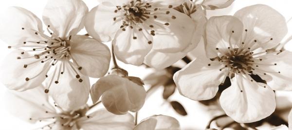 Fototapet FTG 0906 Flori