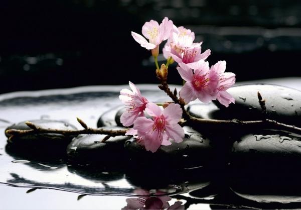 Fototapet FTS 0185 Flori roz si pietre