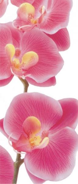 Fototapet FTV 0027 Orhidee roz