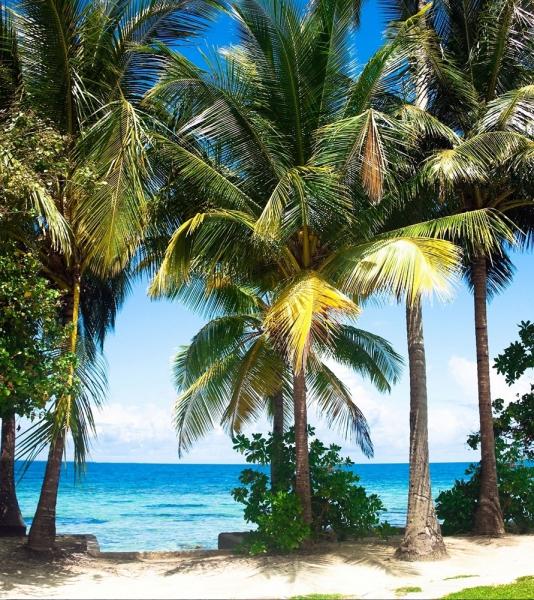 Fototapet FTL 1610 Palm Beach