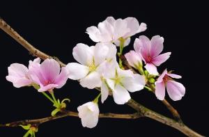 Fototapet 00627 Flori de cires