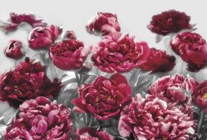 Fototapet XXL4-002 Flori rosii