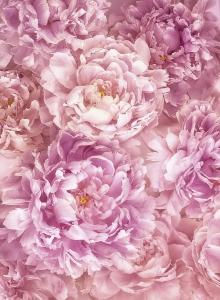 Fototapet XXL2-009 Flori roz