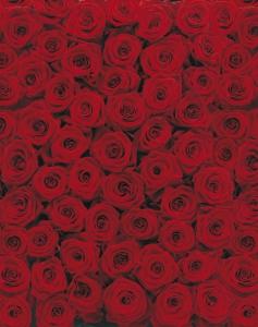 Fototapet 4-077 Trandafiri