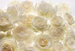 Fototapet XXL4-007 Trandafiri albi