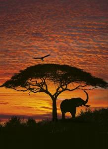 Fototapet 4-501 Apus African
