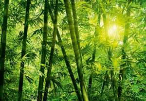 Fototapet 00123 Padurea de bambus