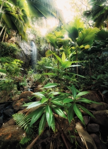 Fototapet XXL2-527 Cascada in jungla