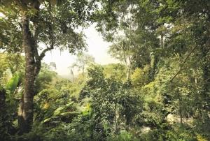 Fototapet XXL4-024 Padure tropicala