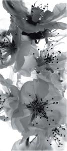 Fototapet FTV 0221 Floare alb si negru