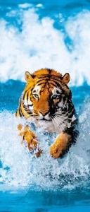 Fototapet 00590 Tigru bengalez