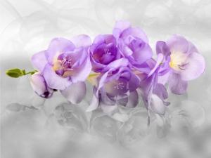 Fototapet FT 1440 Orhidee 3D