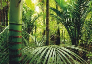 Fototapet FT 0134 Padure tropicala